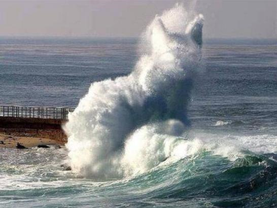 Cat Wave Optical Illusion