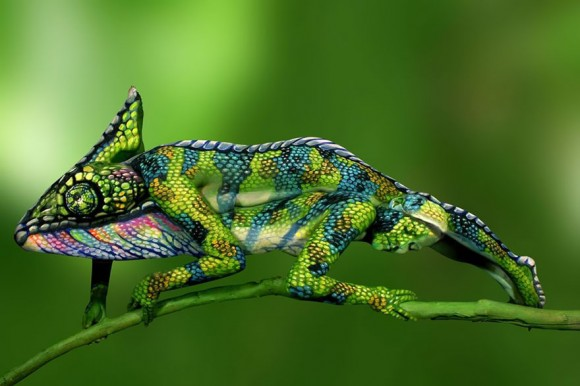 Chameleon Optical Illusion