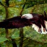Eagle Body Paint Optical Illusion