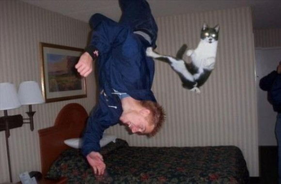 Karate Cat Optical Illusion