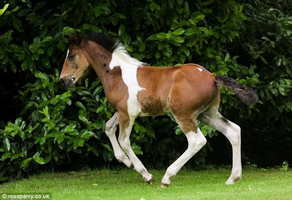 Da Vinci Ghost foal