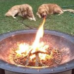 dragon dog fire illusion