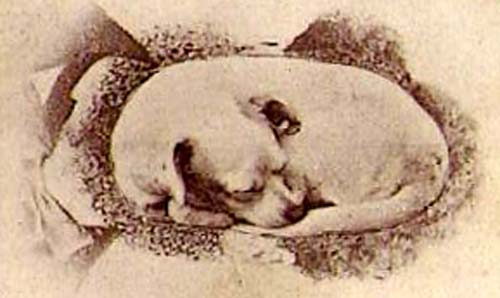 illusion dog owner optical illusions face sleeping moillusions difficult