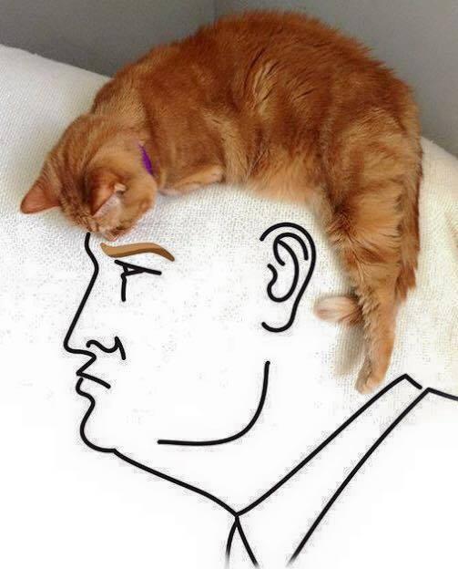 Donald Trump Cat Hair Illusion?