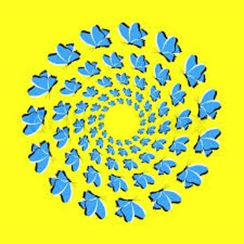 butterflies illusion