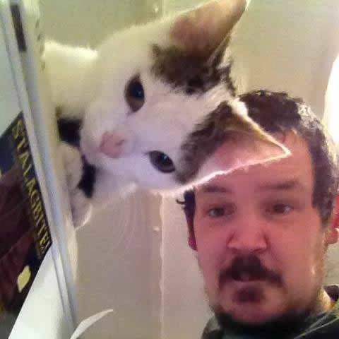 fun cat picture illusion
