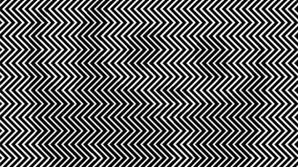 Hidden animal illusion
