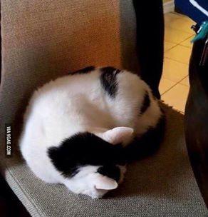 cats butt