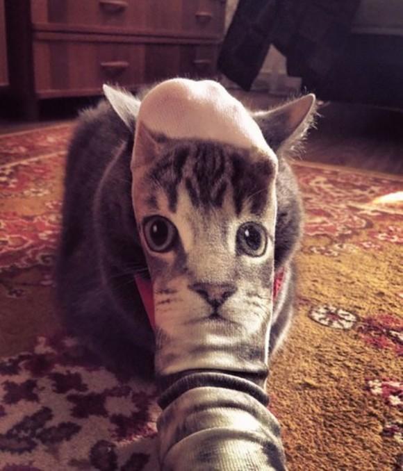 cat face illusion