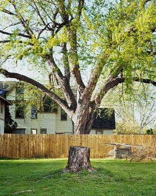 Broken Tree Illusion