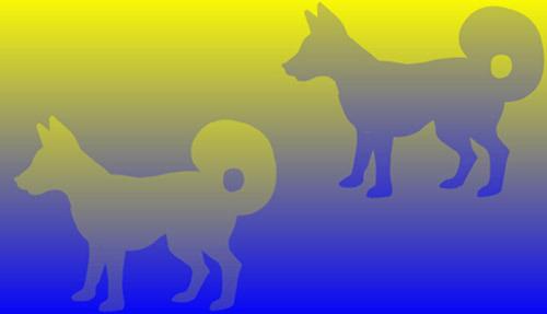 2 dogs optical illusion