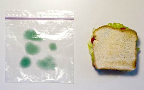 Infected Sandwich Optical Illusion