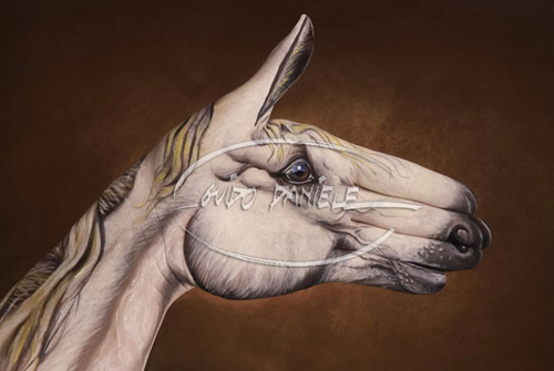 Illusions Hand Body Painting Arts