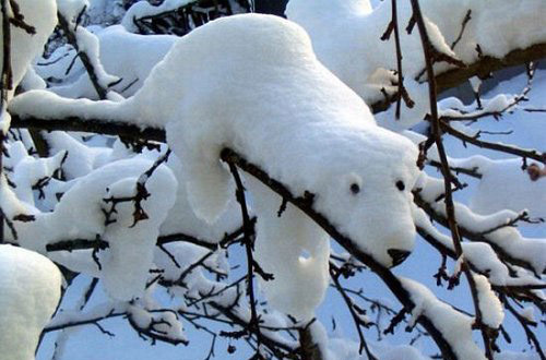 Relaxing Polar Bear Illusion