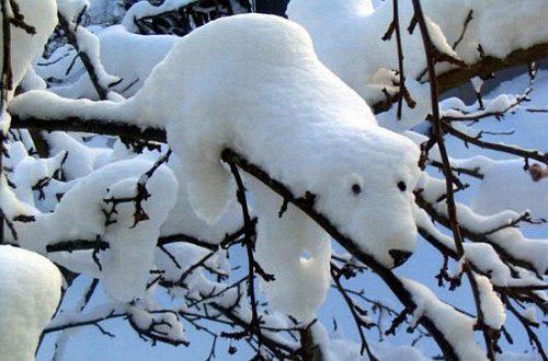 Relaxing Polar Bear Illusion