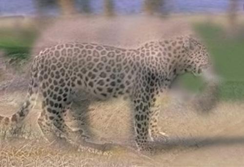 Leophant Hybrid Illusion