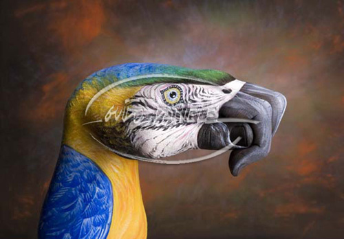 More Handimal Illusions by Guido Daniele