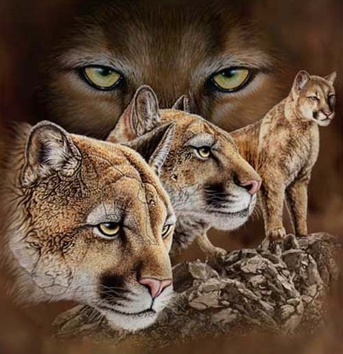 Illusion of Many Hidden Cougars