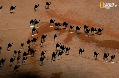 National Geographics Shadow Camels