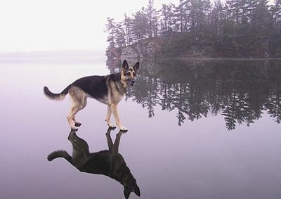 Cats and Dogs Optical Illusions