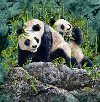 How Many Pandas Can You Spot?