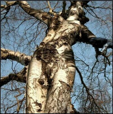 Natures Optical Illusions