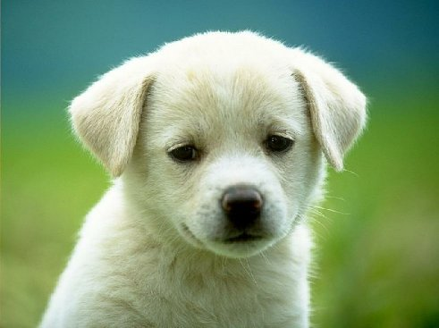 puppy_dog-7158