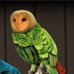 Owl Made of Fruit Optical Illusion