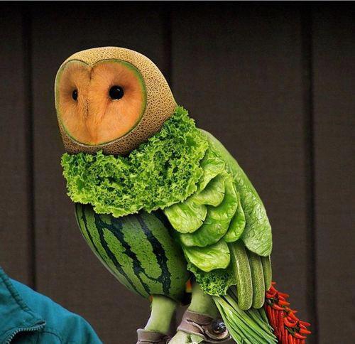 Owl Made of Fruit