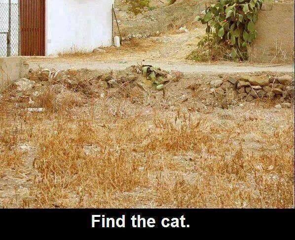 Find the Cat Optical Illusion