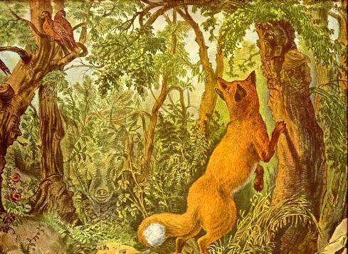 optical illusion hidden animals fox