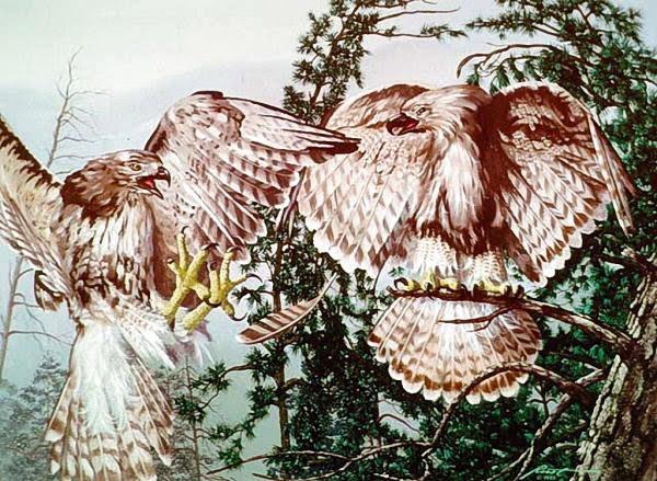 Pair of Eagles Optical Illusion