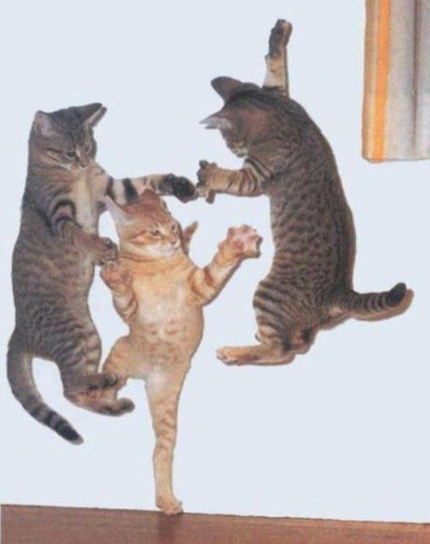 Flying Cat Fight Optical Illusion