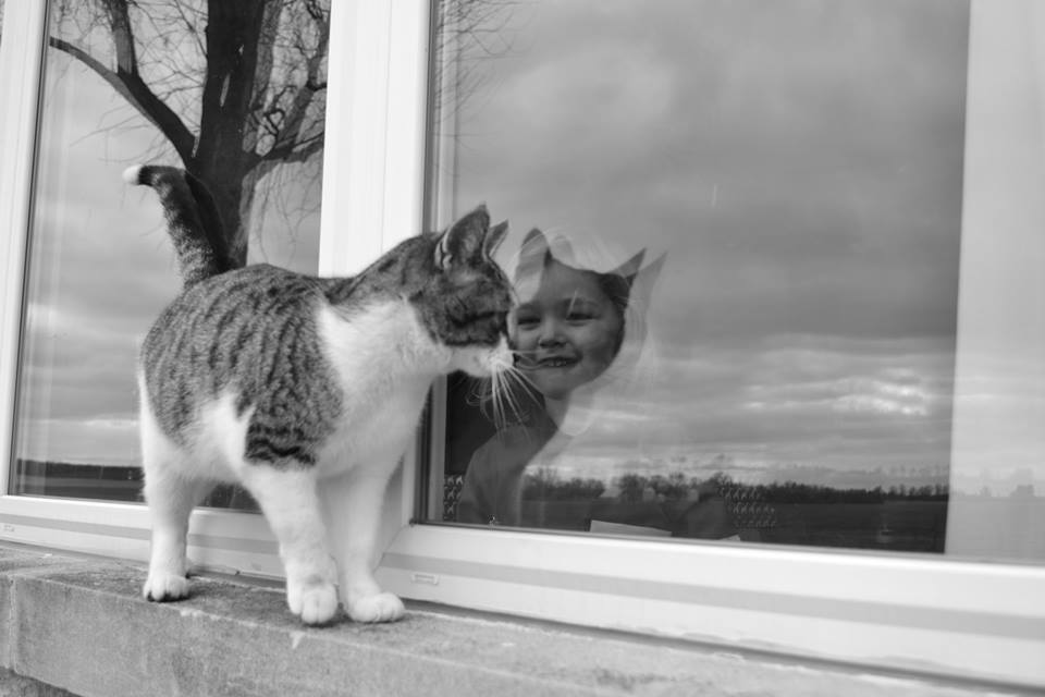 cat human reflection optical illusion seeing another ready
