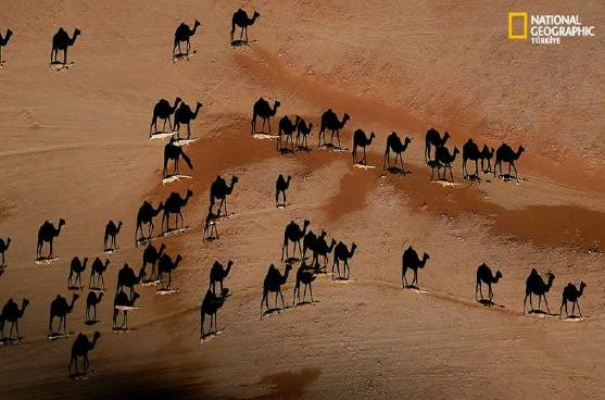 Nationa Geographic Camel Illusion