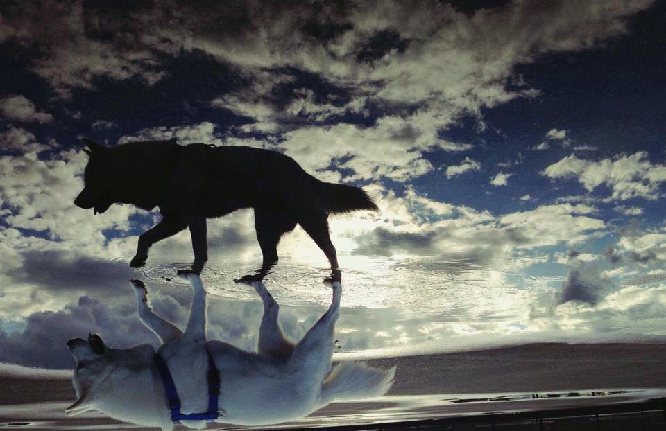 Dog Shadow Optical Illusion