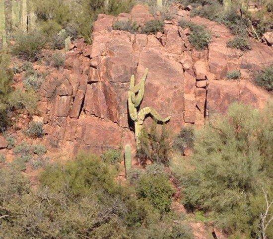 climbing cactus natural illusion
