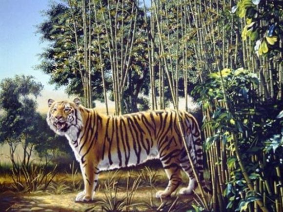 hidden tiger illusion