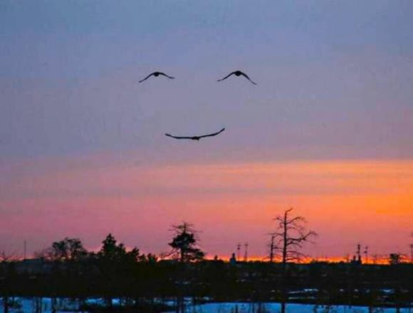 happy bird illusion